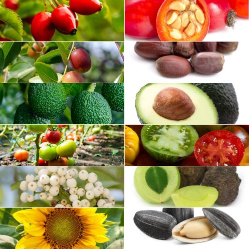 Vegan-Skin-Care-Garden-Las-Vegas-Face-Oil-Dry-Skin-Rosehip-Jojoba-Avocado-Tomato-Tamanu-Sunflower