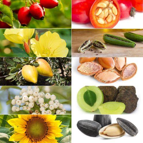 Vegan-Skin-Care-Garden-Las-Vegas-Face-Oil-Oily-Skin-Rosehip-Evening-Primrose-Argan-Tamanu-Sunflower